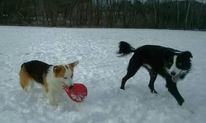 Winter Frizbee Fun