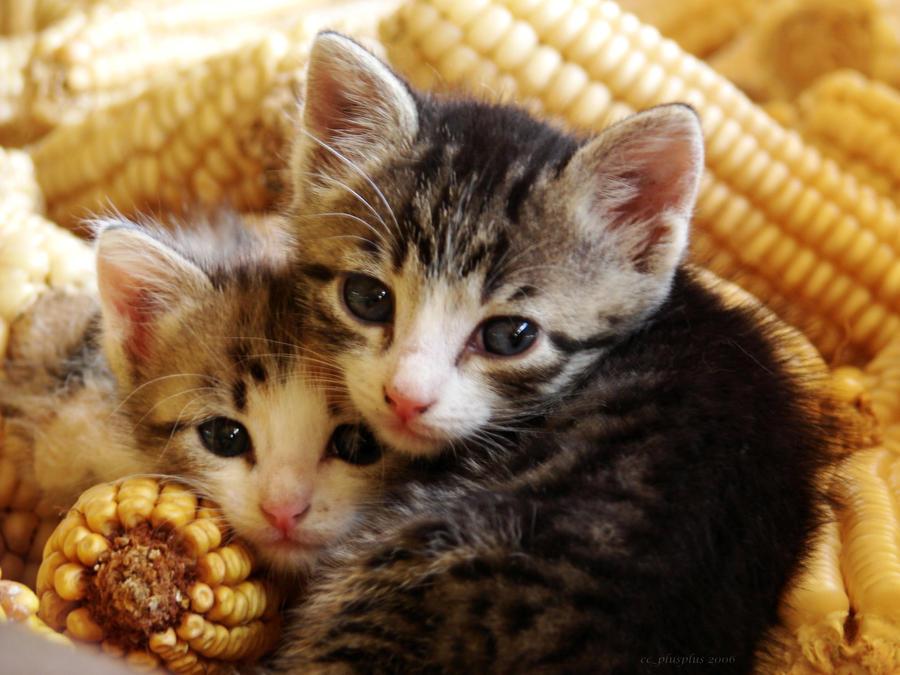 Kittens by Zerseu