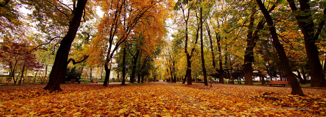 Panorama Autumn Park by Zerseu
