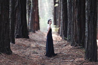 Into the Woods by caitlin-may