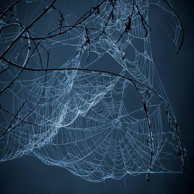 webs.4