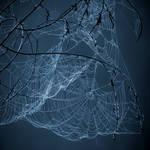 webs.4 by plutonicfluf