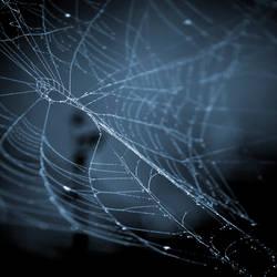 webs.5