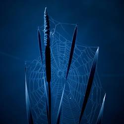 webs.6 by plutonicfluf