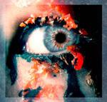 Wax eye