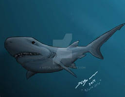 Shark Week 2014: Blunt Nose Six Gilled Shark