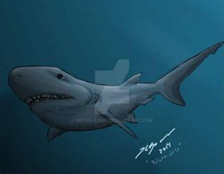 Shark Week 2014: Blunt Nose Six Gilled Shark