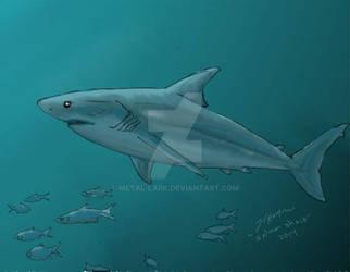 Shark Week 2014: Salmon Shark
