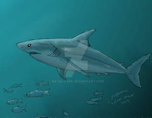 Shark Week 2014: Salmon Shark