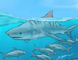 Shark Week 2014: Tiger Shark