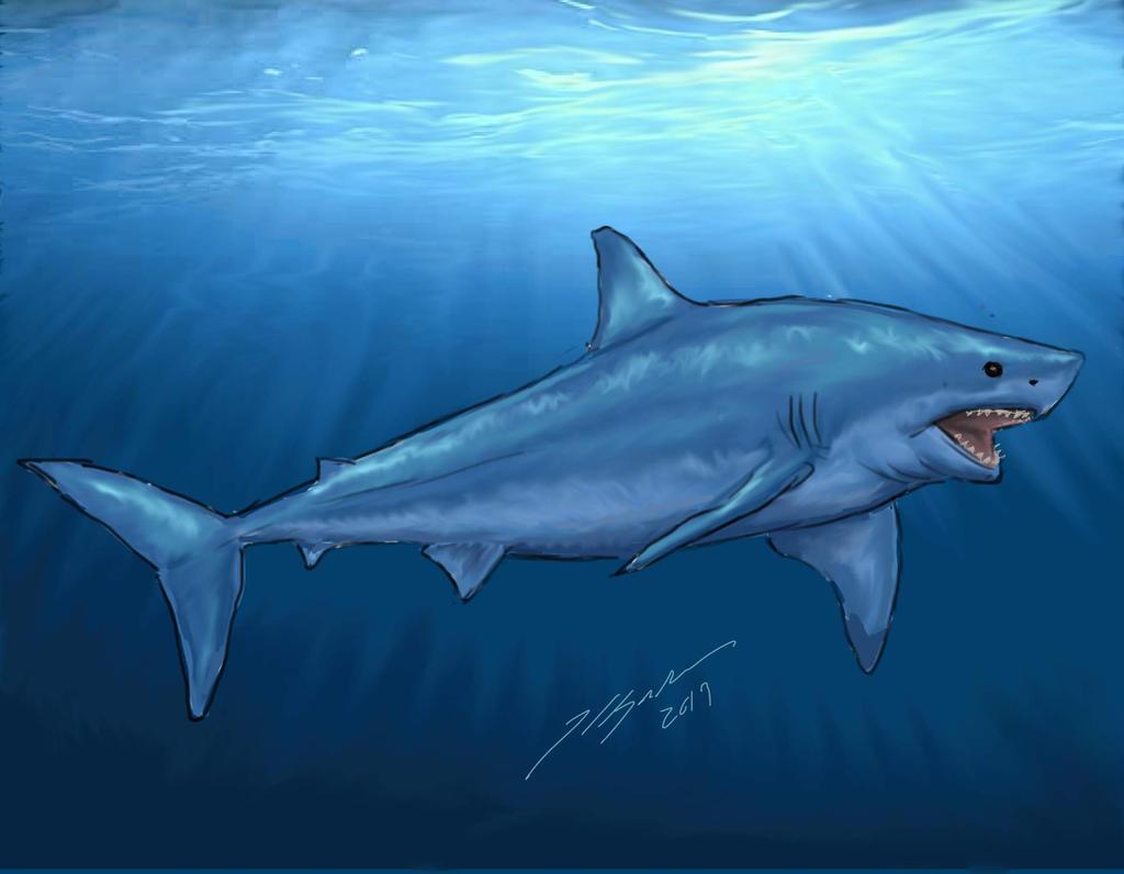 Shark Week 2014: Great White Shark
