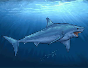 Shark Week 2014: Great White Shark