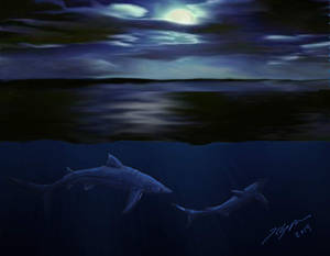 Shark Week 2014: Blue Shark