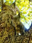 A Kitten's First Tree III