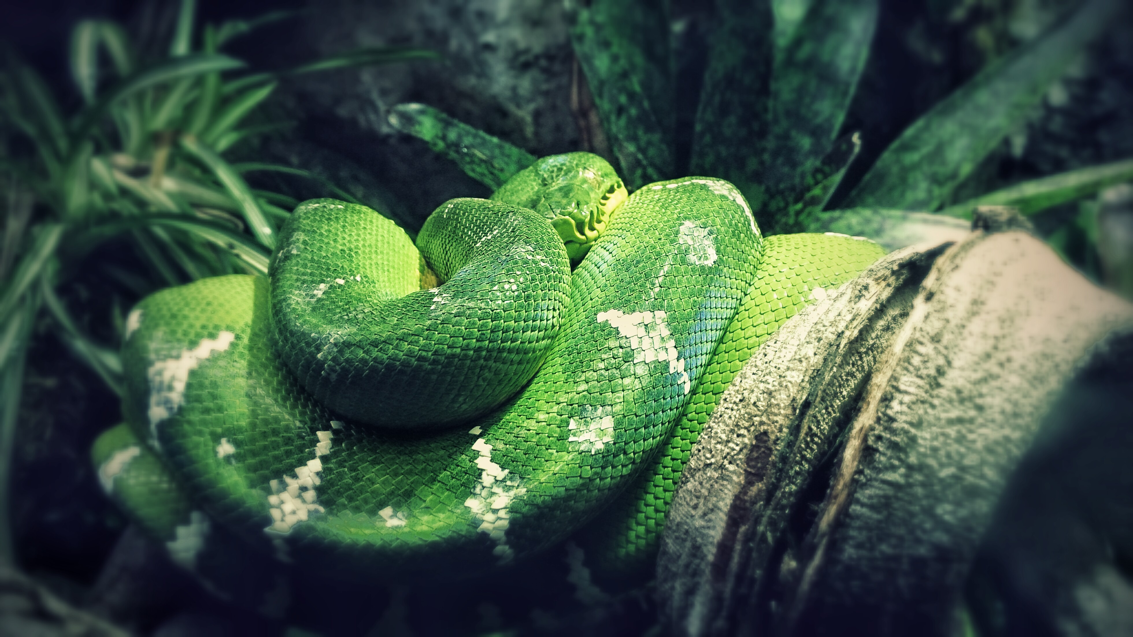 Photography #1 | Green Snake. by pyxArtz