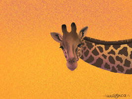 Peek-a-boo by wildgica