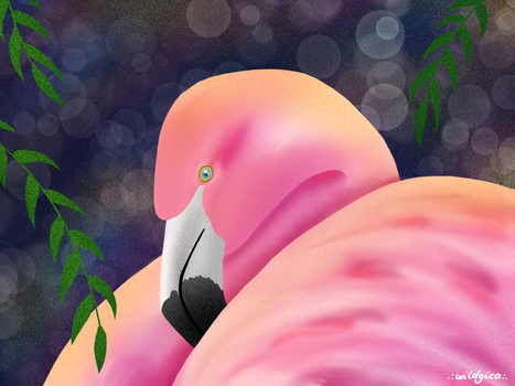 Too Much Flamingo