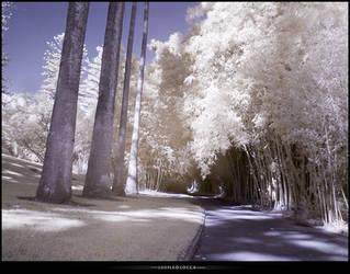white garden by subaqua