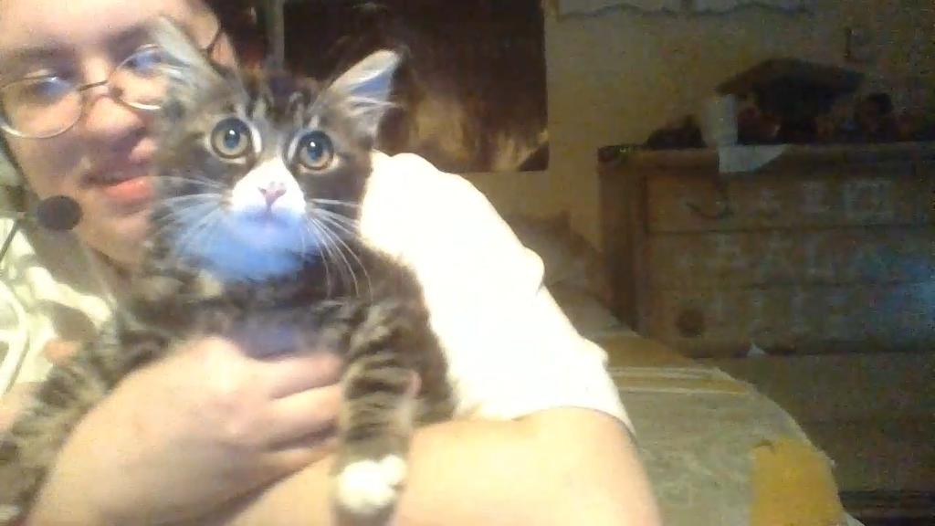 New Kitten: Zeus by Hellguard274