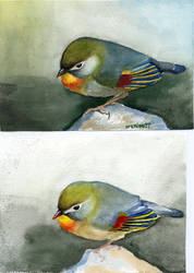 Bird watercolor 2 by mirrorplex
