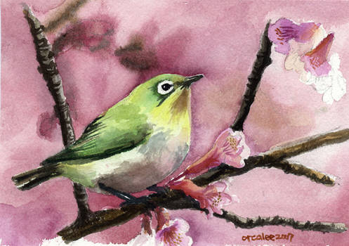 Bird watercolor