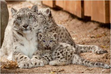 Mum, that's boring.... by Velvet-Paw