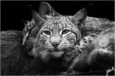 Cuddling by Velvet-Paw