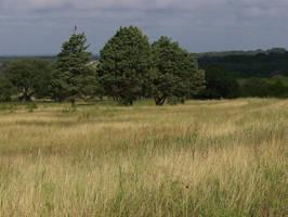 Random Field 001 by Mourge-stawk
