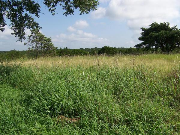how tall is overgrown grass