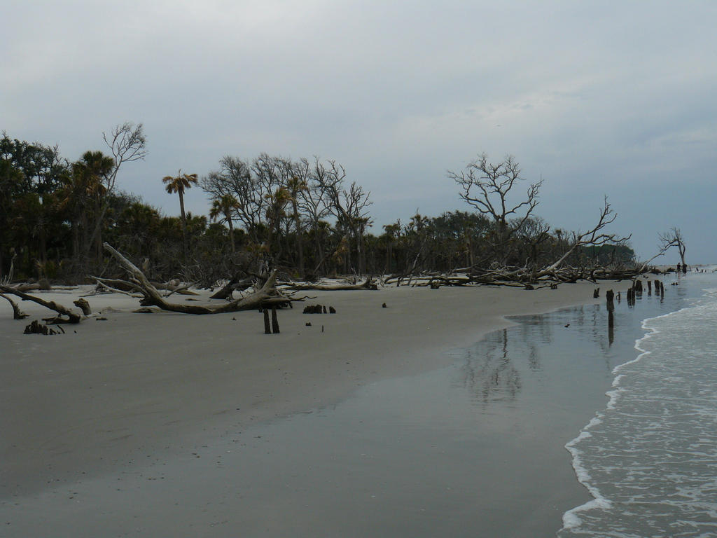 Image Result For Hunting Island Beach