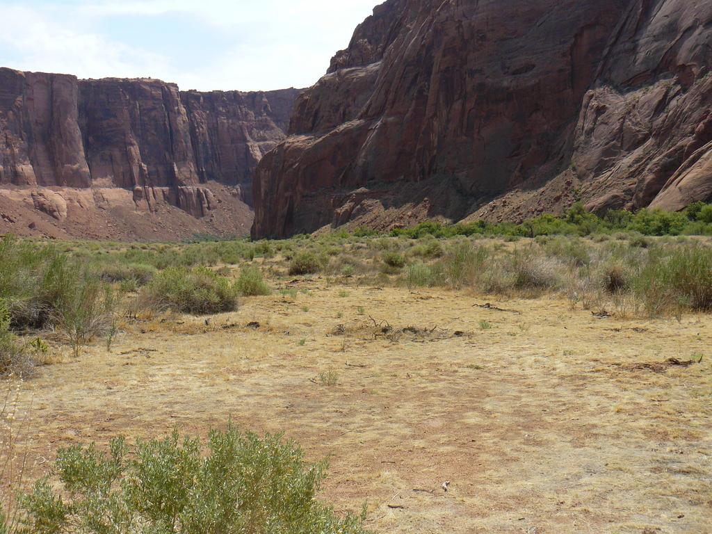 Desert Field 002 by Mourge-stawk