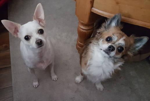 Teddy and Taci