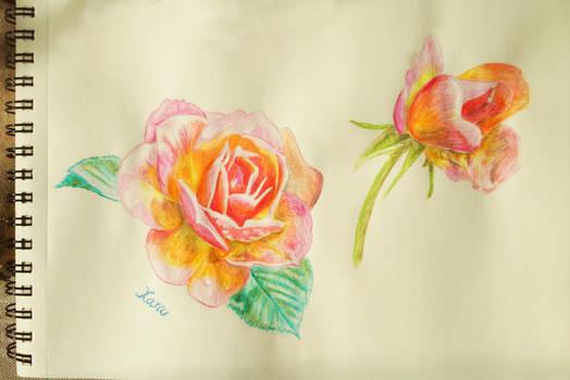 Roses - a study