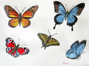 Butterflies - a study