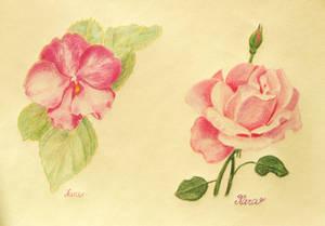 Flowers - a study