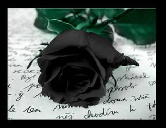 Black Rose by Ketmara