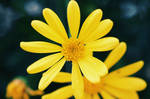 Flower by CryptikFox