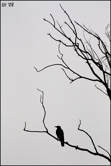Winter ... by lironha