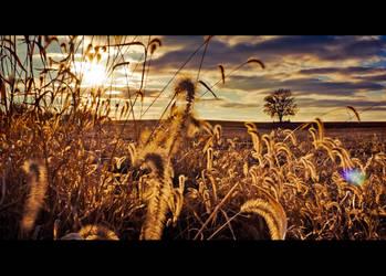 Rural Sunset Cinema by savedforarainyday