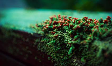 Decked in Lichens