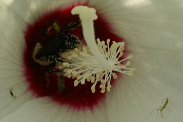 Bumble Bee (rear view) by bobcraton