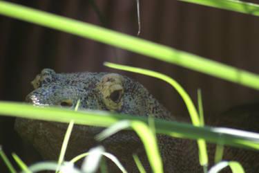 Kimodo Eyes by bobcraton