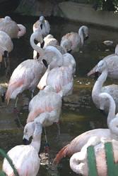 Flamingos by bobcraton