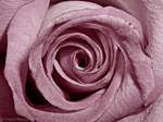 A Whirl of Pink