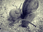 Mother and Baby by Fayrii