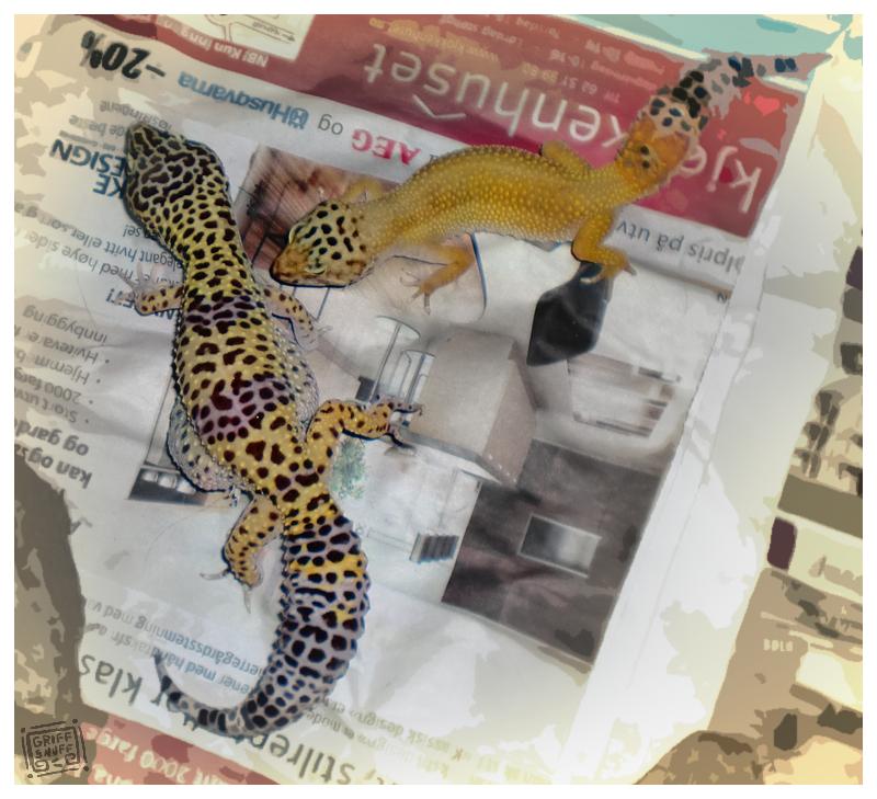 Thegeckos by griffsnuff