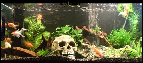 My fish tank by griffsnuff