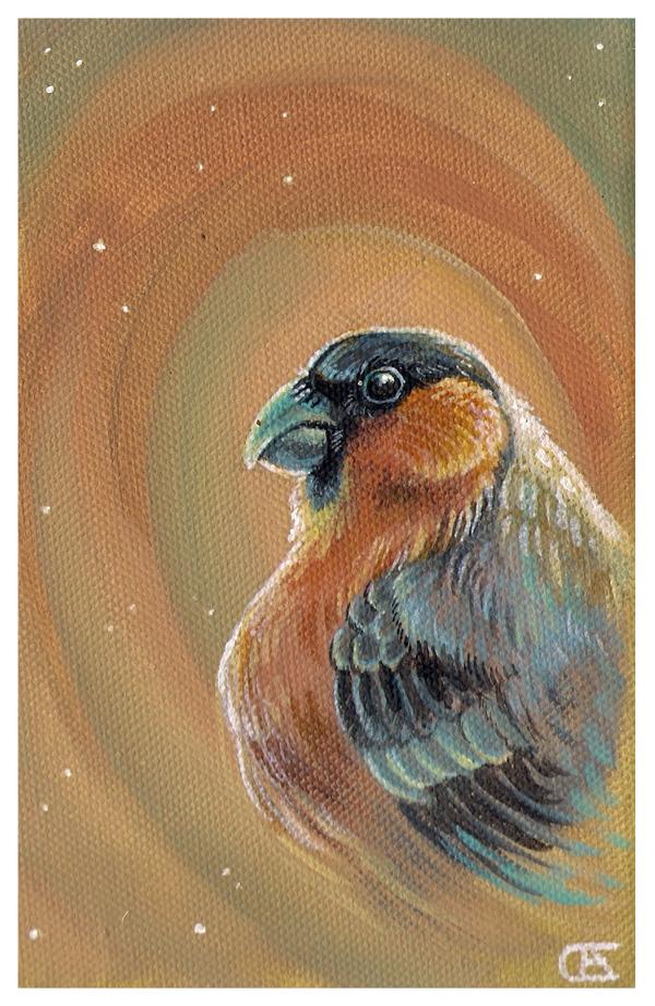 Bullfinch by griffsnuff