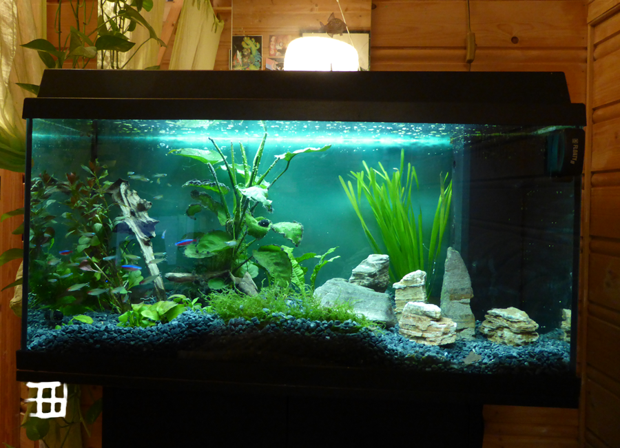 Updated fishtank by griffsnuff
