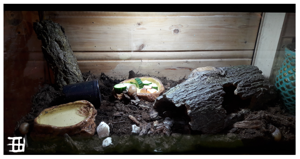 White jade snail tank setup by griffsnuff